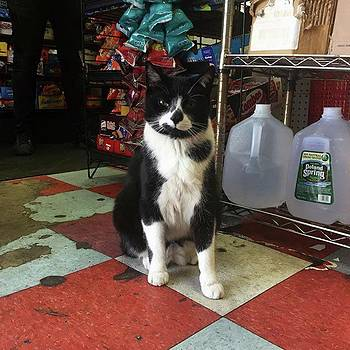 A Very Cool #bodegacat On 144th Street by Gina Callaghan