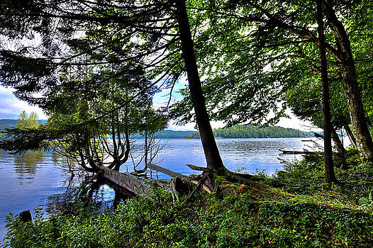 A View from Covewood by David Patterson