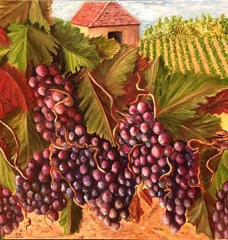 A Vineyard  by Chuck Gebhardt