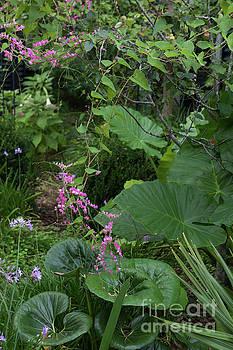 Dale Powell - A Walk in the Garden