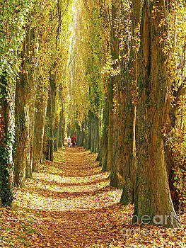 A Walk in the Poplars by Alex Cassels