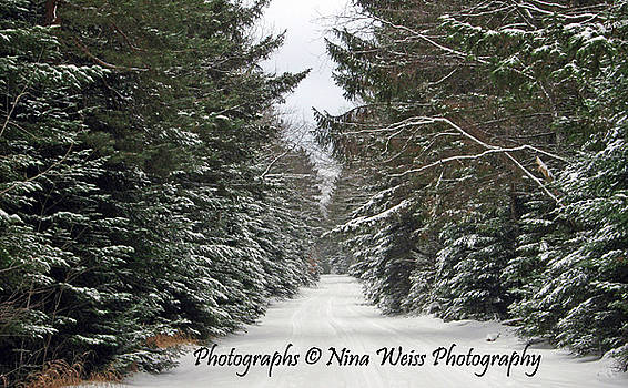 A Walk in the Woods - Best Landscape Photography Christmas Gift by Nina Weiss