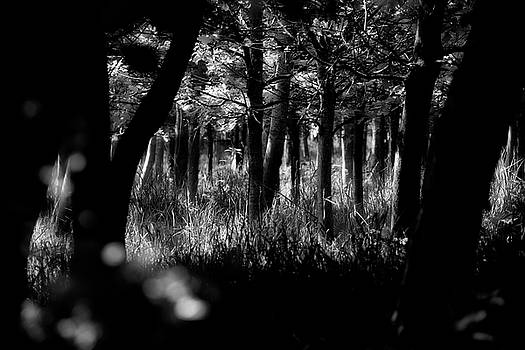 Jeremy Lavender Photography - A walk in the woods