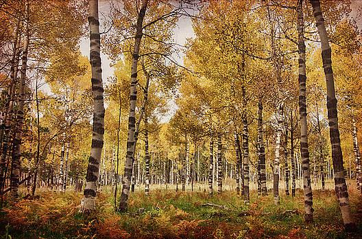 Saija Lehtonen - A Walk in the Woods Part II