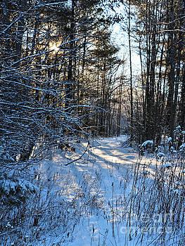 Sandra Huston - A walk in the Woods