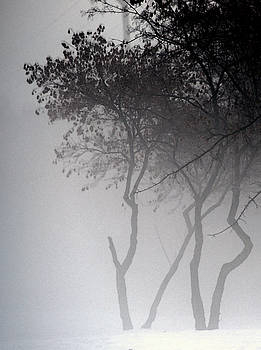 Linda Shafer - A Walk Through The Mist