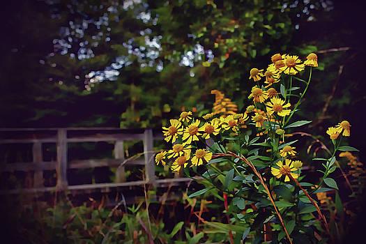 A Walk With Wildflowers by Jessica Brawley