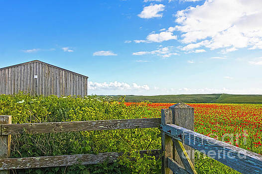 A West Pentire Farm by Terri Waters