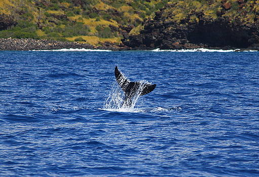 A Whale of a Time by Brian Governale