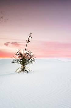 Ellie Teramoto - A White Sands Yucca Under Dreamy Sky - New Mexico