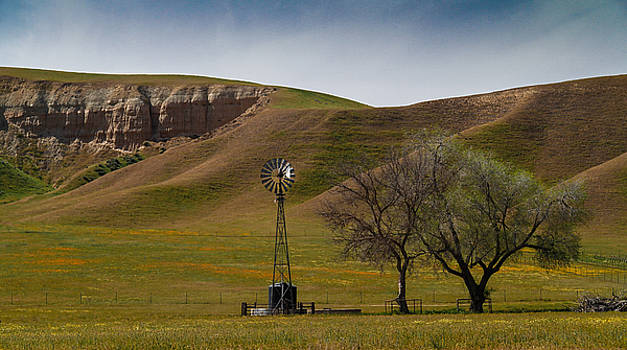 A Windmill and Wildflowers by Roger Mullenhour