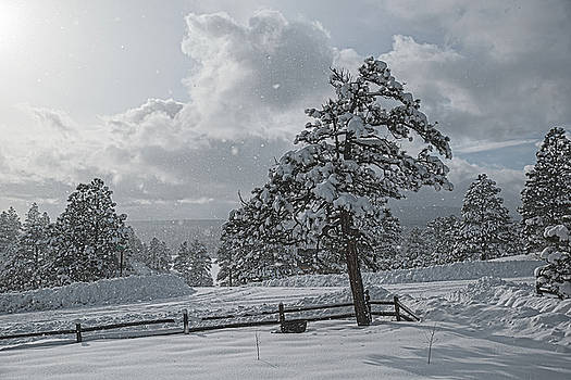 A Winter Storm in Pagosa by Jason Coward