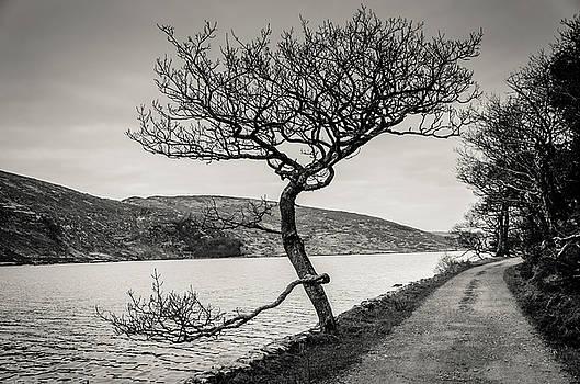Martina Fagan - A Winter tree