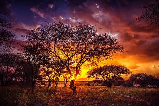 Sylvia J Zarco - A Wish at Sunset