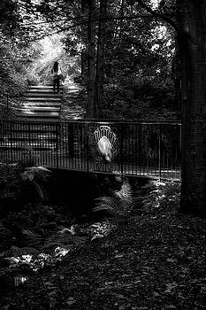 A woman walking her dog at Pittencrieff Park by Jeremy Lavender Photography