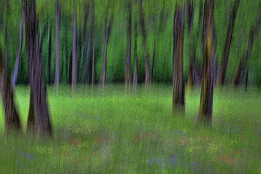 A Woodland Scene by Phil Dyer