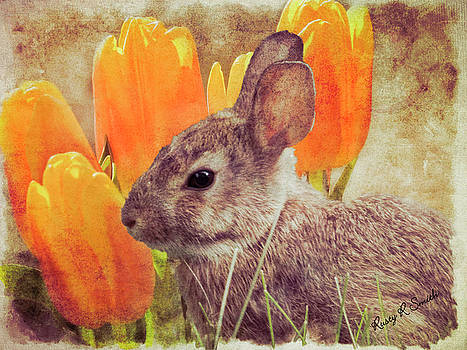 A young cottontail rabbit setting near group of tulips. by Rusty R Smith