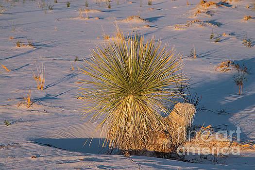 Bob Phillips - A Yuca in the Sand