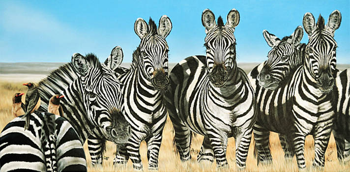 A Zeal of Zebras by Katie McConnachie