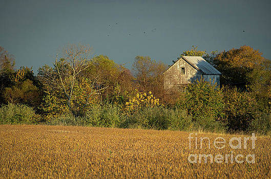 Abandoned Barn In The Trees by Melissa Fague