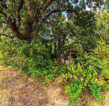 Abandoned House East Texas Wide Angle with Tree by Micah Goff