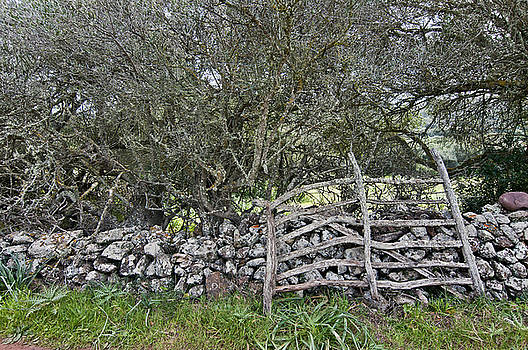 Pedro Cardona Llambias - Abandoned Minorcan Country Gate in natural green colors