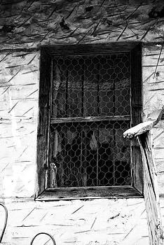 Abandoned Window by Bener Kavukcuoglu