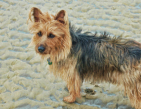 Abby on the Beach by Norma Rowley