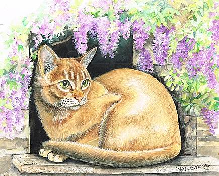 Abbyssinian with wisteria. by Val Stokes