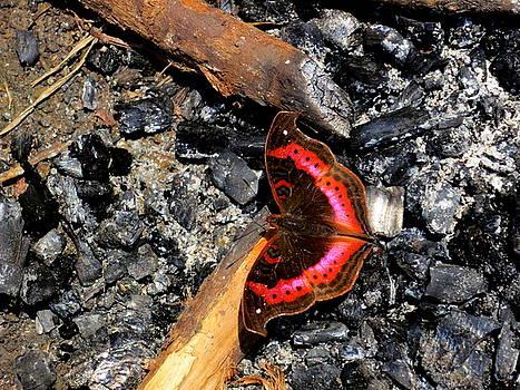 Aberdare charcoal by David Olson