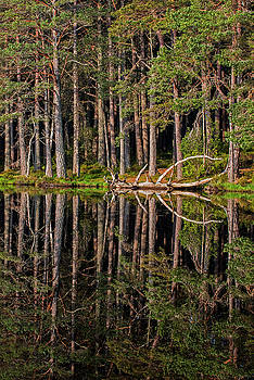 Arterra Picture Library - Abernethy Forest