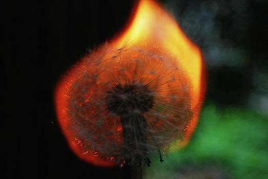 Ablaze by Matthew Hall