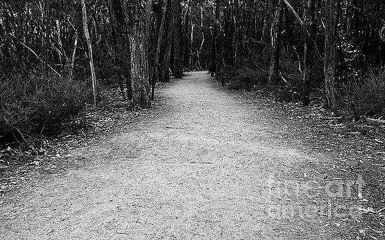 Tim Richards - Aboriginal Path BW
