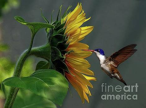 Nectar With Insect by John Kolenberg