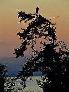 Sandy Rubini - Above the Salish Sea