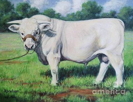 Abraham, French Charolais Bull by Vickie Fears