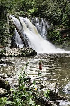 Jemmy Archer - Abrams Falls Flowers