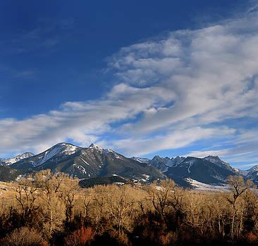 Reimar Gaertner - Absaroka Range mountains through Cottonwood trees on Old Yellows