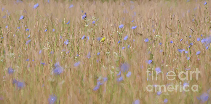 Abstract Art - Goldfinch in the Chicory by Kerri Farley