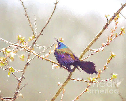 Abstract Art - Grackle In the Snow by Kerri Farley