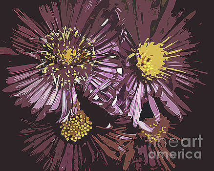 Abstract Aster Flowers by Miss Dawn