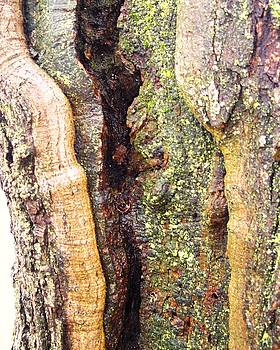 Abstract Bark by Anna Villarreal Garbis