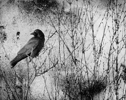 Abstract Black And White Blackbird by Gothicrow Images