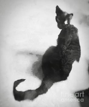 Abstract Cat by Glennis Siverson