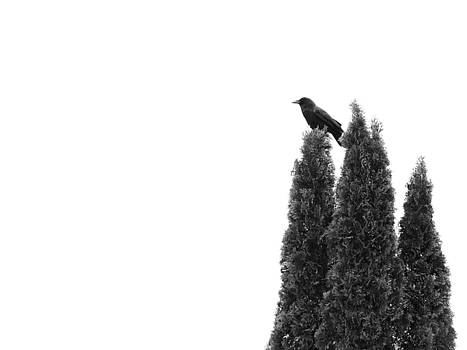 Abstract Crow In Bushes  by Gothicrow Images