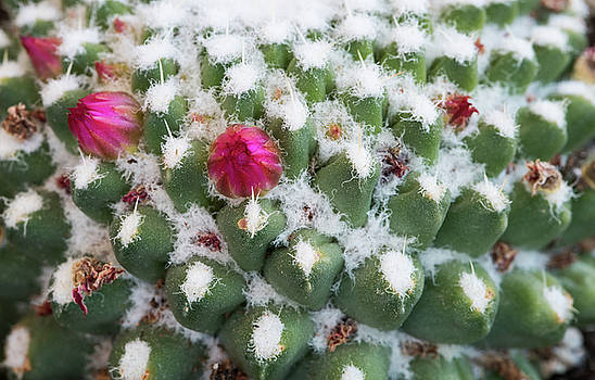 Michalakis Ppalis - Abstract details of a cactus plant with a flower