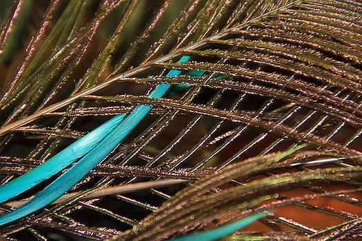 Angela Murdock - Abstract Feather
