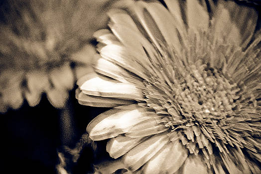 Abstract Flower 1 by Matthias Flynn