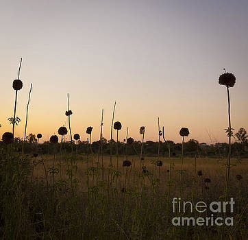Tim Hester - Abstract Flowers At Dusk