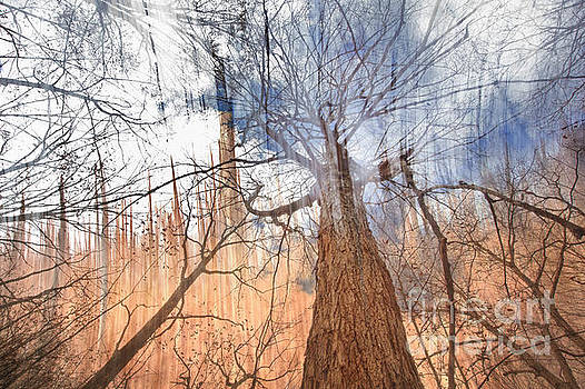 Jonathan Welch - Abstract Forest